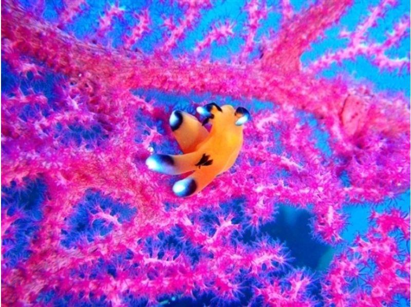 【静岡・伊豆/沼津】魚の群れの中で泳げます/体験ダイビングの紹介画像