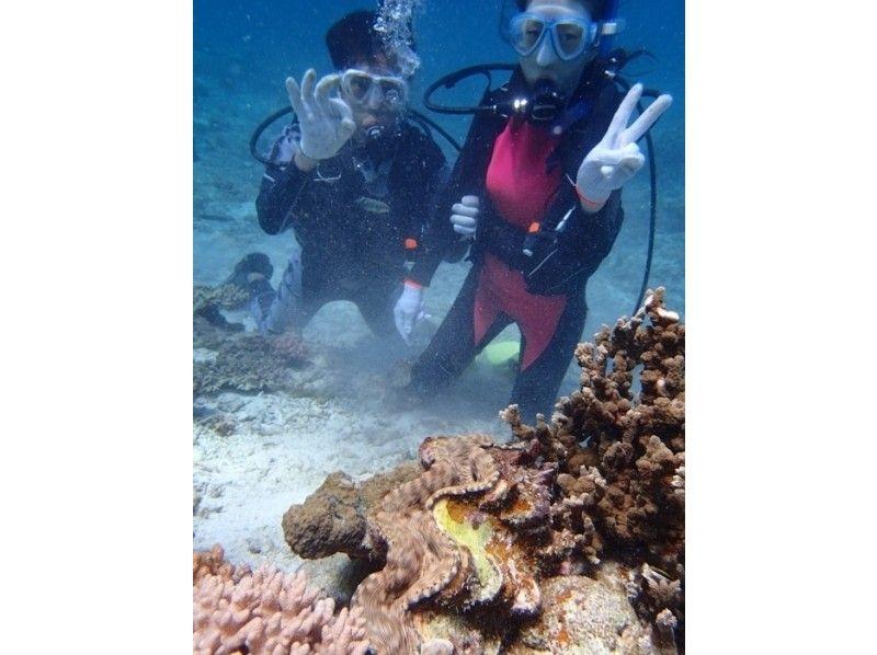 【沖縄・石垣】お子様OK!パナリ島で体験ダイビングコースの紹介画像