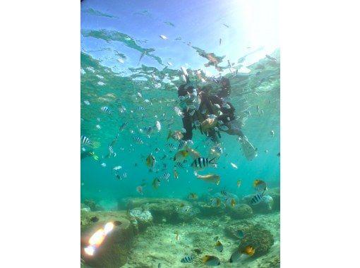 【概率最高!当天预约OK! ] 蓝洞浮潜!免费照片、视频和喂食!の紹介画像