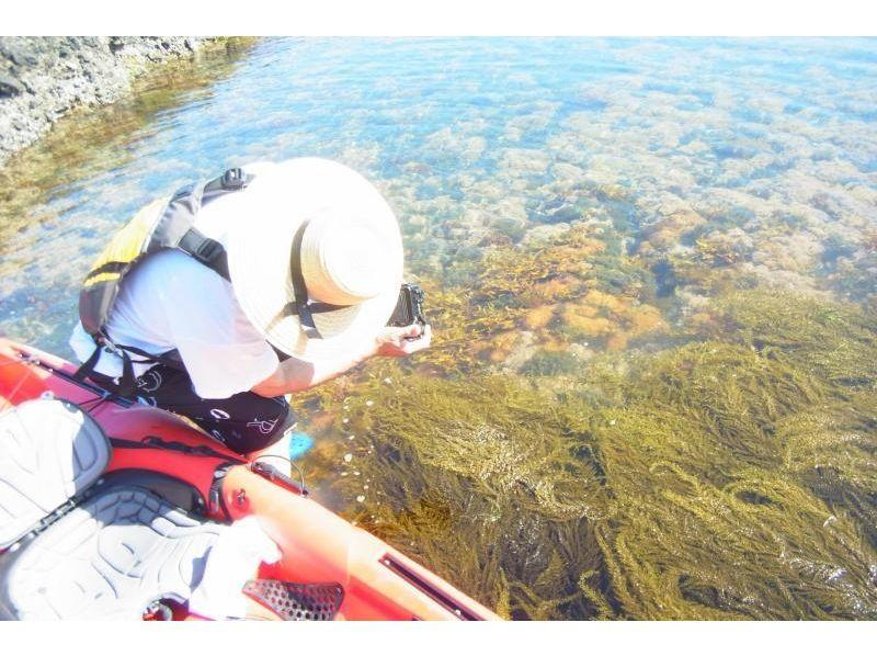 【新潟・佐渡島】自然を満喫しよう!青の洞窟シーカヤックツアー(3時間)の紹介画像