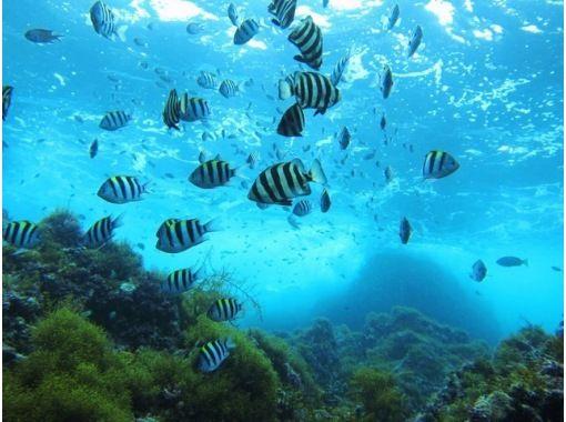 【新潟・佐渡島】佐渡の海の世界を体感しよう!体験ダイビング(2時間)