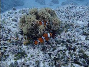 エルマリノ ダイビングサービス(El Marino Diving Service)の画像