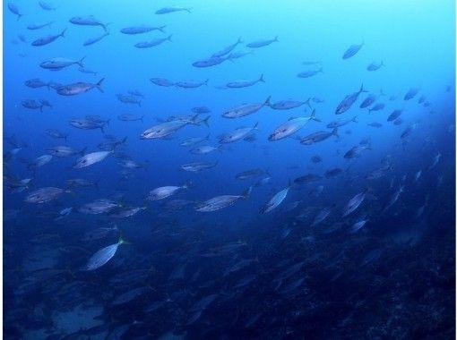 【高知・志和】四万十の海へ【ファンダイビング】