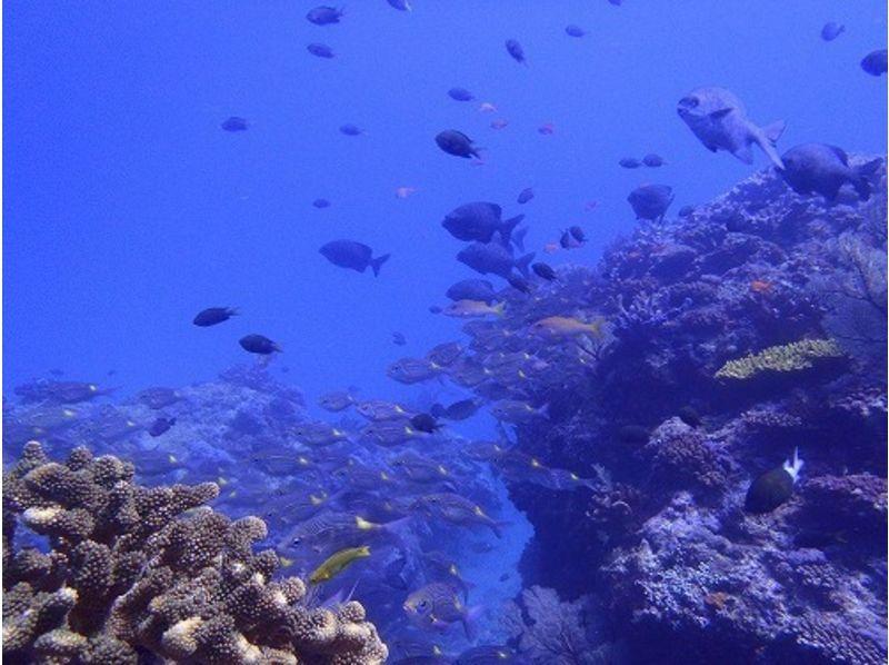 【沖縄・那覇】ダイバー憧れの地、慶良間諸島!1日体験ダイビング(2ダイブ付&スノーケル付き)の紹介画像