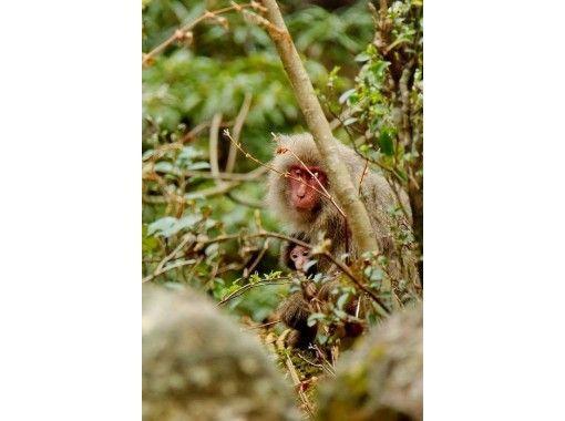 【鹿児島・屋久島】西部林道 世界遺産登録エリアでツーリング