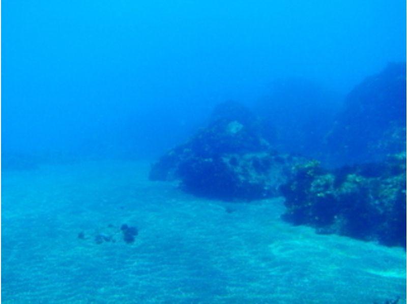 【東京・伊豆大島】ライセンス不要・未経験者歓迎!体験ダイビングの紹介画像
