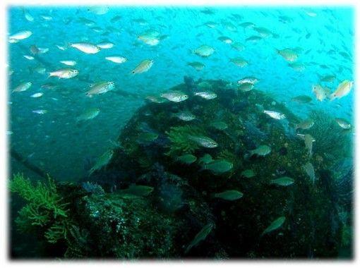 【静岡・熱海】ダイバーだけが知る、秘密の沈船を見に行こう!【熱海・ファンダイブ・2ボート】(日本語)の紹介画像