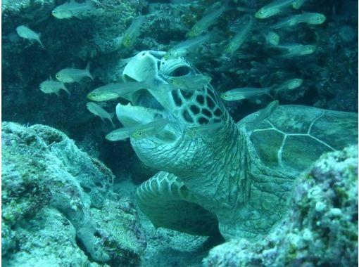 【沖縄・阿嘉島】ライセンス取得者限定!沖縄の海で思い出作りファンダイビング