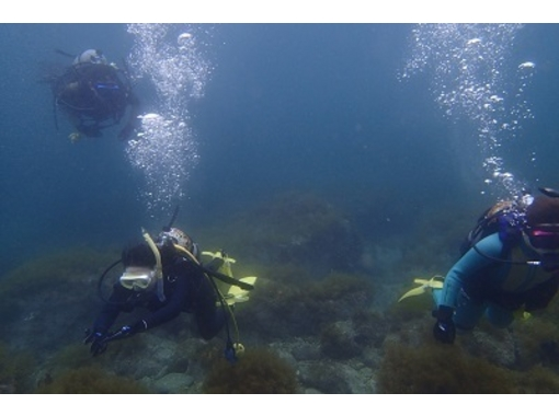 [Aichi Toyota] Let's peek in the sea! Diving [inexperienced person beginner unnecessary welcome license]の紹介画像