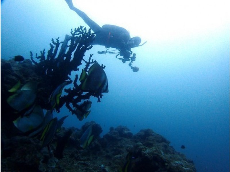 【沖縄・石垣島】たっぷり海を楽しもう!ボートファンダイブ【ダイビング】の紹介画像