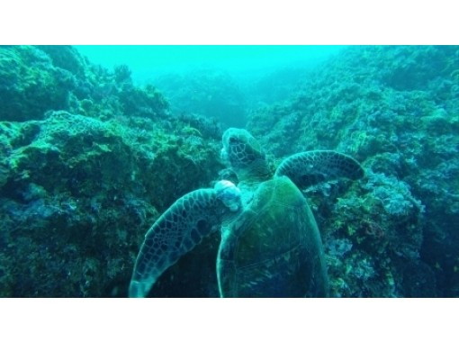 【東京 三宅島】ライセンスが無くても楽しめる!比較的浅い海で行う体験ダイビング