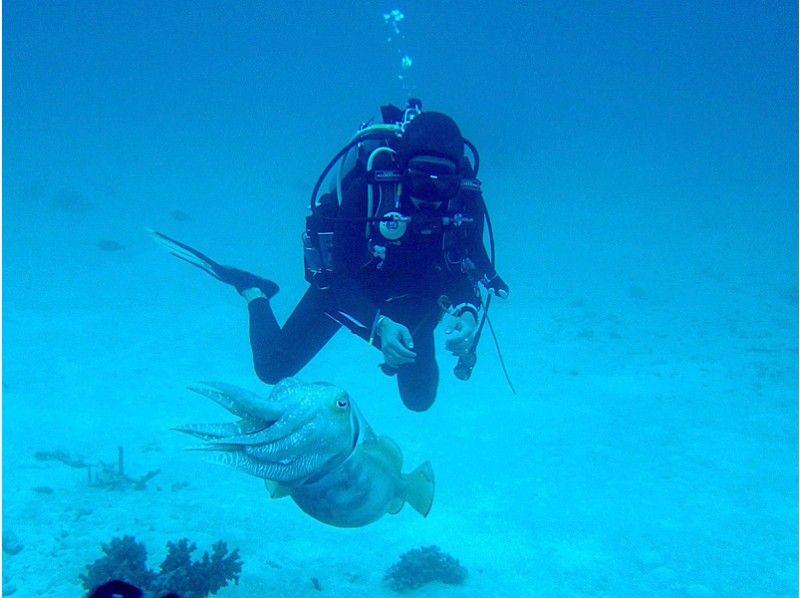 【沖縄・石垣島】ダイバーになろう!ダイビングのライセンス取得コース(OWDコース)の紹介画像