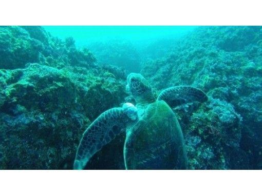 【東京 三宅島】海が静かでどこでも潜れるファンダイビング【ビーチガイド】