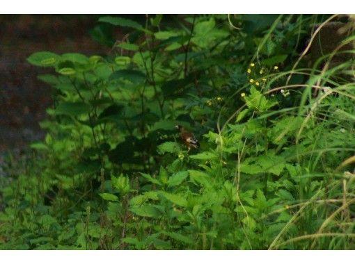【東京・三宅島】離島ならではの自然を満喫!「ネイチャーガイド半日ツアー」宿への送迎あり
