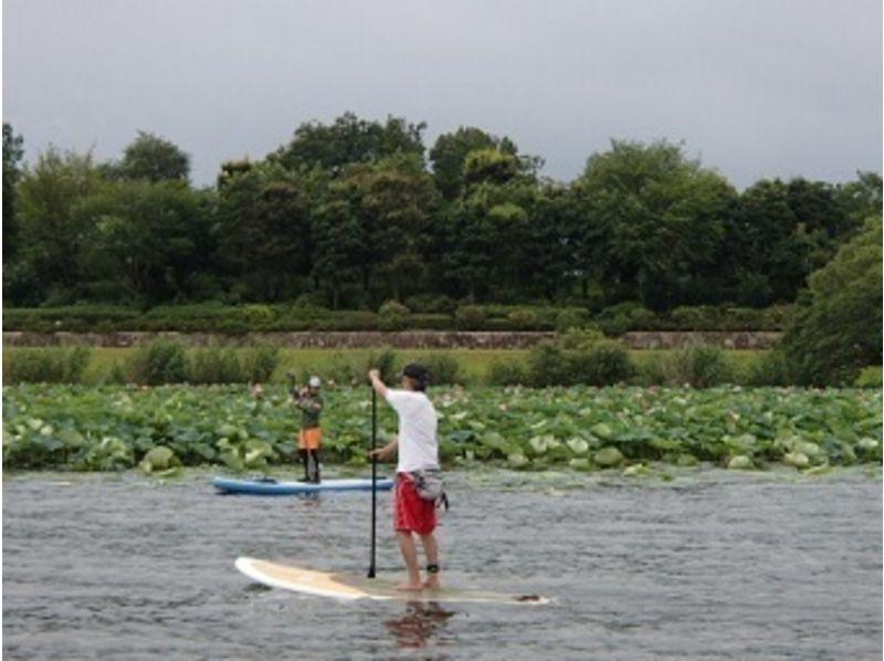 【滋賀 琵琶湖】SUPで見に行く蓮の花のお花見コースの紹介画像