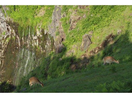 【北海道・知床】断崖から流れ落ちる滝を目指して散策!フレペの滝ネイチャーウォッチング