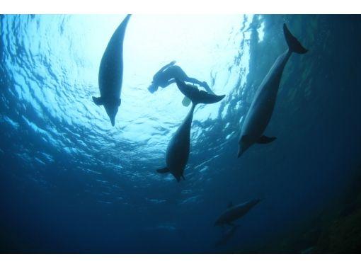 【東京都・三宅島】イルカ好き大集合!三宅島から行くドルフィンスイム