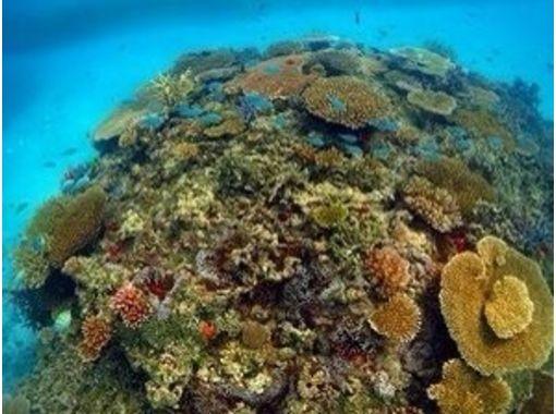 【香川・瀬戸内海】海のいろいろを学ぼう!アドバンスド・ダイバーコースの紹介画像