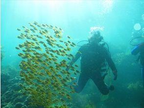 Diving Shop 海遊びの画像