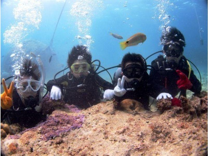 【沖縄・石垣島】ライセンス不要!海をとことん楽しもう!体験ダイビング&シュノーケルプランの紹介画像