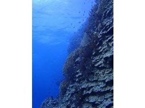Step海ダイバーズ・スクール宮古島の画像
