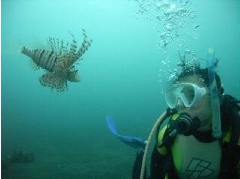 【神奈川/湘南】通年楽しめる!海の世界をのぞいてみよう!体験ダイビングの紹介画像