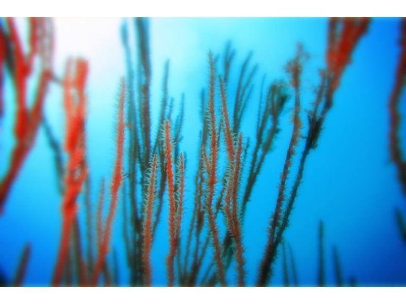 【静岡/伊豆海洋公園】ゆったり潜るファンダイビングコースの紹介画像