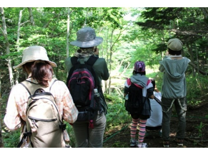 [Hokkaido Shiretoko] summer program the most popular! Shiretoko Five Lakes guide tour - World Natural Heritage Shiretoko forest walks - Introduction image
