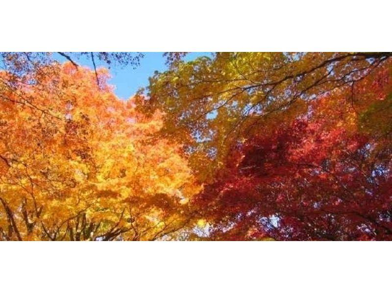 【青森・八甲田山】トレッキング(紅葉の山をあるくルート)の紹介画像