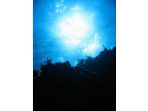 伊豆大島ダイビングセンターカラーズ(Colors Diving Center)の画像