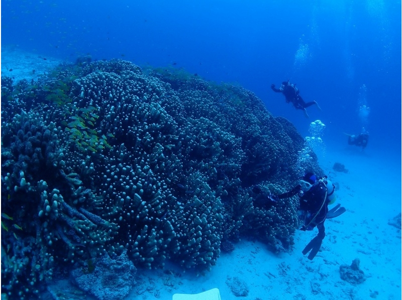 【沖縄 石垣島】ライセンス無しで海中を楽しめる体験ダイビング【1~3ダイブ/ランチ付き】の紹介画像