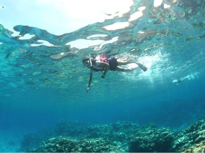 【沖縄・慶良間】珊瑚礁とウミガメツアー 3.5時間【ボートシュノーケル】の紹介画像