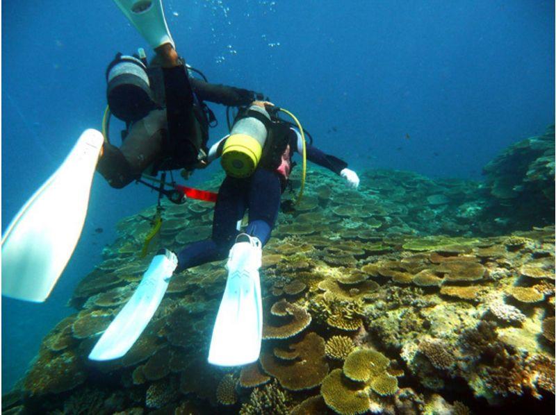 【沖縄/宮古島】伊良部のブルーに遊ぶ体験ダイビングの紹介画像