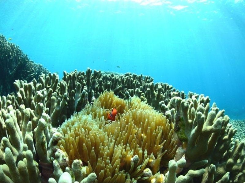 【沖縄・慶良間】体験ダイビング(ビーチエントリー)の紹介画像
