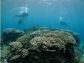 ダイビングサービス スタジオーネ(diving service Stagione)の画像
