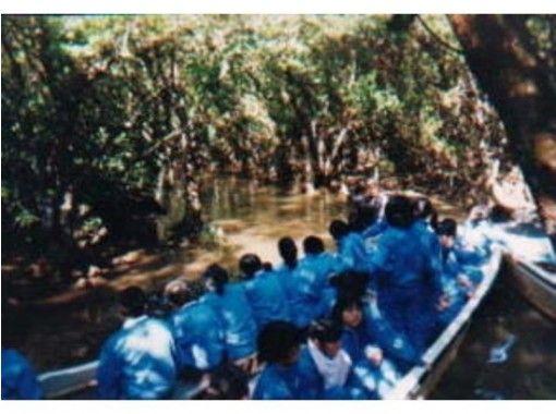 【鹿児島・奄美大島】マングローブ観光遊覧船(ガイド付き)