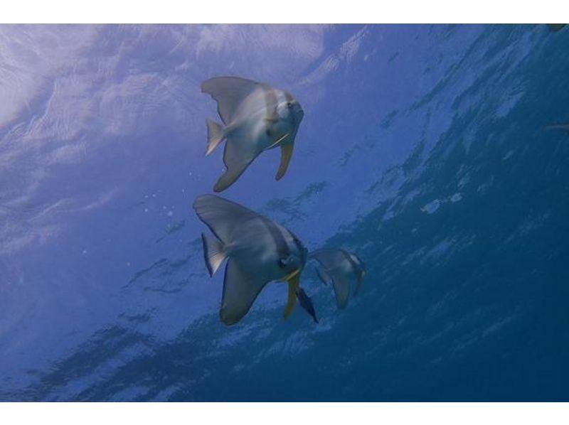 【沖縄・石垣島】少人数でリラックスダイブ!ファンダイビング(2ボート or 3ボート)の紹介画像