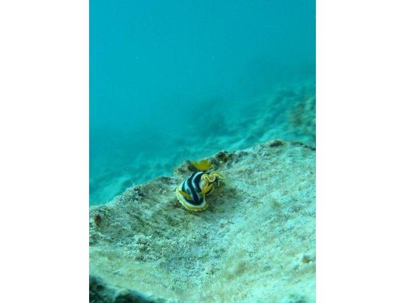 【沖縄・石垣島】エメラルドに輝く海の中へ!体験ダイビング(2ダイブ)の紹介画像
