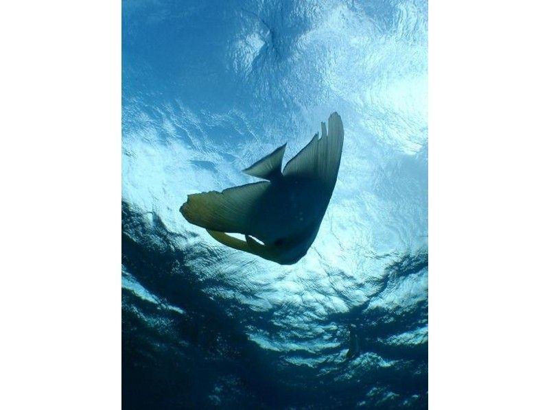 【沖縄・石垣島】南の楽園、鮮やかな海の世界へ!体験ダイビング&シュノーケリングの紹介画像