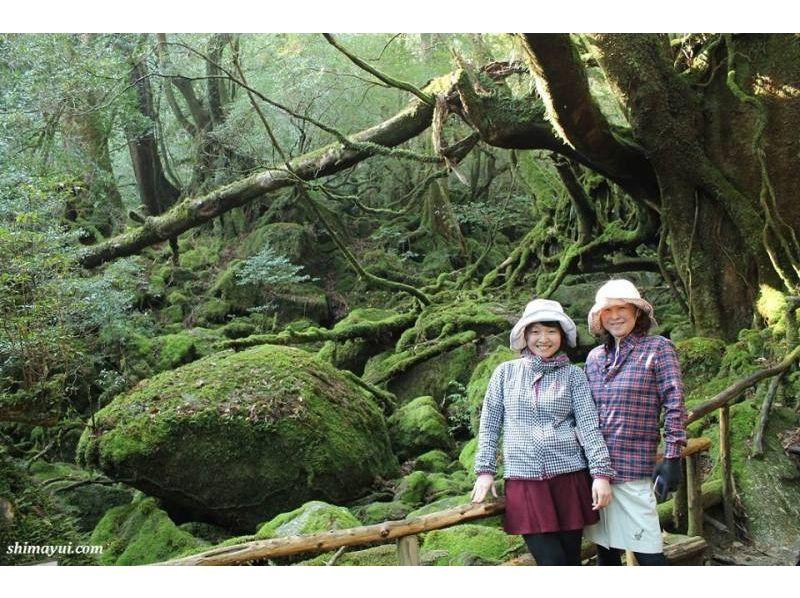 【屋久島】太古の森に佇む迫力ある縄文杉を見に行こう!の紹介画像