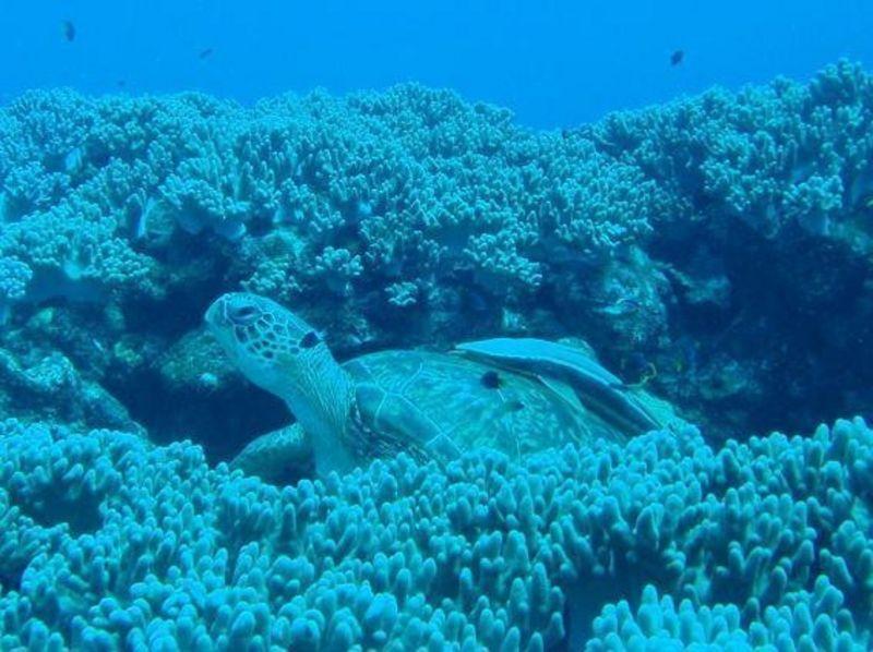 【沖縄・石垣島】美しい海でマンタに会えるかも!?シュノーケリング「たっぷりコース」の紹介画像
