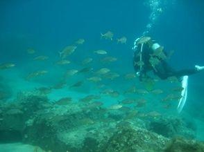 ダイビングスポット ブルーマリンの画像