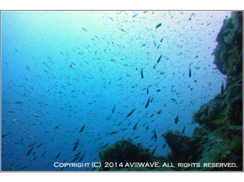 【北海道・札幌】体験ダイビング[海での開催]の紹介画像