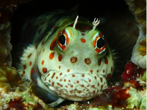 沖縄ダイビングサービス バナナリーフ(Banana Reef)の画像