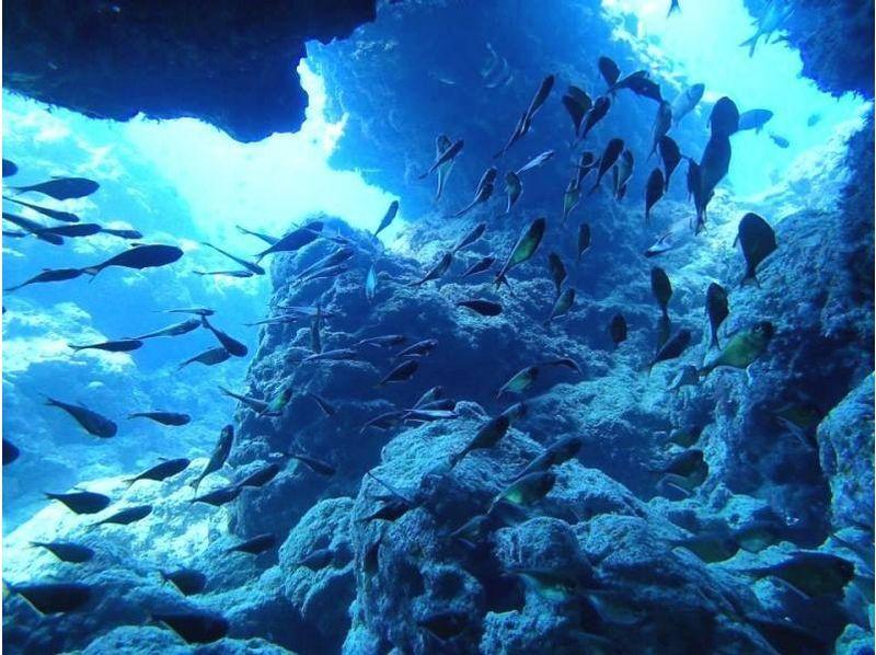 【沖縄】神秘の「青」を全身で体感!青の洞窟ツアー(ビーチ体験ダイビング)の紹介画像