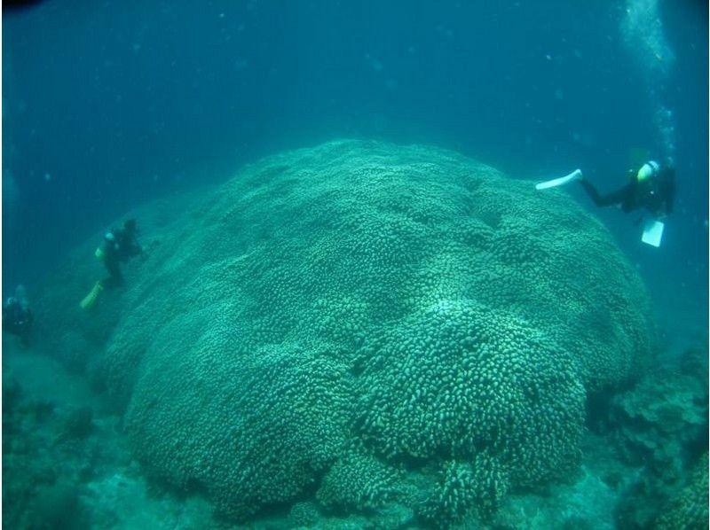 【沖縄・石垣島】石垣の海ではじめよう♪体験ダイビング(半日コース)の紹介画像