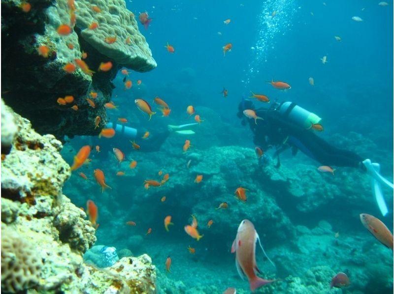 【沖縄・石垣島】体験ダイビング(半日コース)の紹介画像