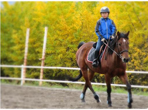 【群馬・みなかみ】馬場レッスンプラン!【牧場内コース/約45分】