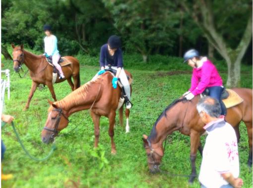 【群馬・みなかみ】馬場レッスン&森林浴を満喫!プラン【森林散歩コース/約60分】