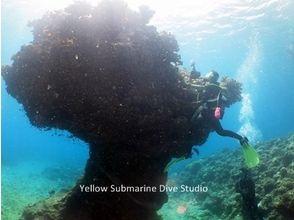Yellow Submarine Dive Studio(イエローサブマリンダイブスタジオ)の画像